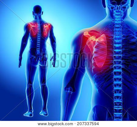 3D Illustration Of Scapula, Medical Concept.