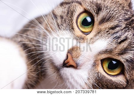 The Kitten Is Staring, Close-up,