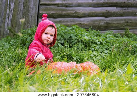 a small serious child in a purple dwarf suit sits on the grass near a huge pumpkin and looks in front. The symbol of halloween. Behind the wooden wall with copy space for text.
