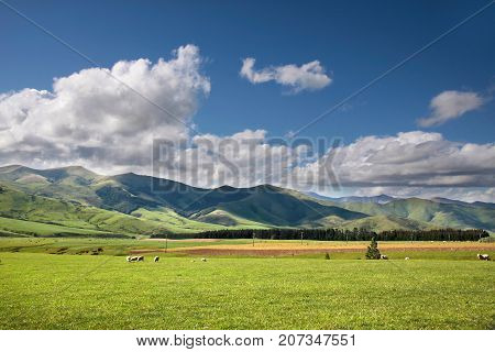 Green Farmland near Mossburn between Queenstown and Te Anau Southland South island New Zealand