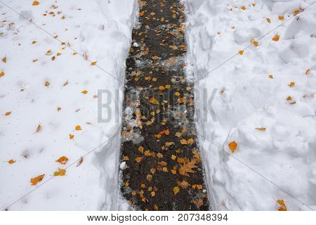 Fallen orange leaves covered with snow lying on the footway. Yellow leaf. Autumn leaf fall.