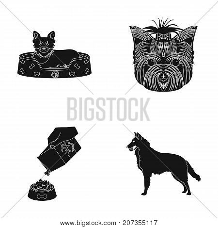 A dog in a lounger , a muzzle of a pet, a bowl with a feed, a sheepdog with a ball in his teeth. Pet, dog care set collection icons in black style vector symbol stock illustration .