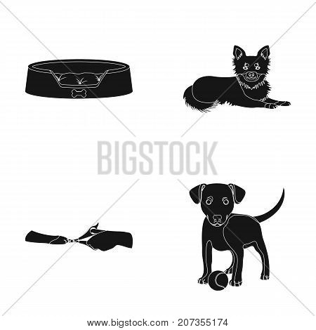 Lounger for a pet, clipping of claws in a vet clinic, lying dog, puppy with a ball. Vet clinic and pet, dog care set collection icons in black style vector symbol stock illustration .