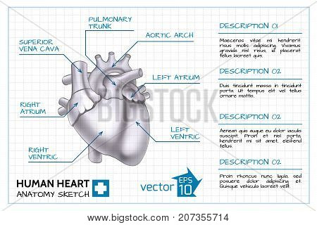 Medical cardiology infographic template with text and human heart anatomy on paper sheet isolated vector illustration