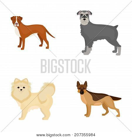 Retriever, terrier, pomeranian, and other  icon in cartoon style.Breed, color, training icons in set collection