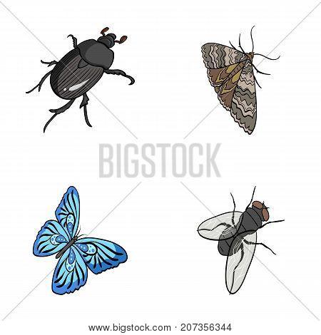 Arthropods insect beetle, moth, butterfly, fly. Insects set collection icons in cartoon style vector symbol stock isometric illustration .