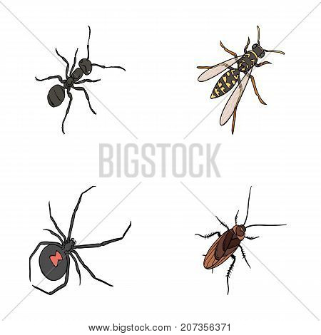 An insect arthropod, an osa, a spider, a cockroach. Insects set collection icons in cartoon style vector symbol stock isometric illustration .