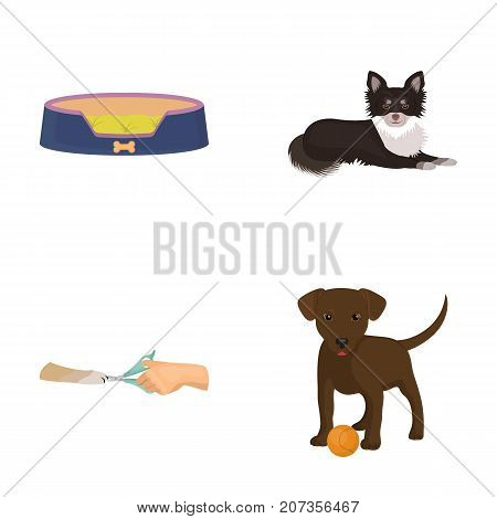 Lounger for a pet, clipping of claws in a vet clinic, lying dog, puppy with a ball. Vet clinic and pet, dog care set collection icons in cartoon style vector symbol stock illustration .