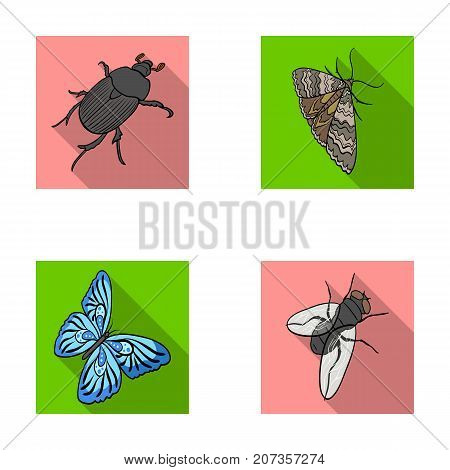 Arthropods insect beetle, moth, butterfly, fly. Insects set collection icons in flat style vector symbol stock isometric illustration .