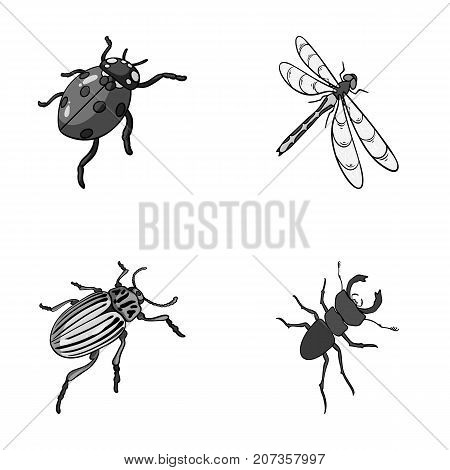 Arthropods Insect ladybird, dragonfly, beetle, Colorado beetle Insects set collection icons in monochrome style vector symbol stock isometric illustration .