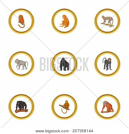 Ape icons set. Cartoon style set of 9 ape vector icons for web design