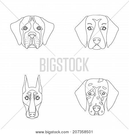 Muzzle of different breeds of dogs.Dog of the breed St. Bernard, golden retriever, Doberman, Dalmatian set collection icons in outline style vector symbol stock illustration .