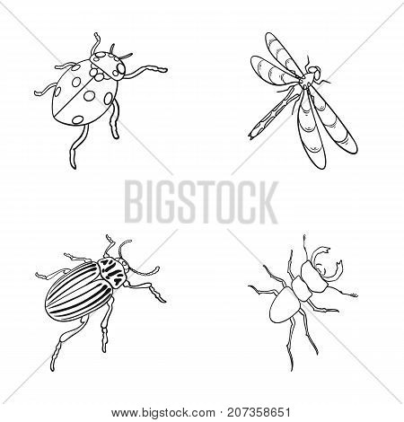 Arthropods Insect ladybird, dragonfly, beetle, Colorado beetle Insects set collection icons in outline style vector symbol stock isometric illustration .