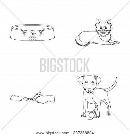 Lounger for a pet, clipping of claws in a vet clinic, lying dog, puppy with a ball. Vet clinic and pet, dog care set collection icons in outline style vector symbol stock illustration .