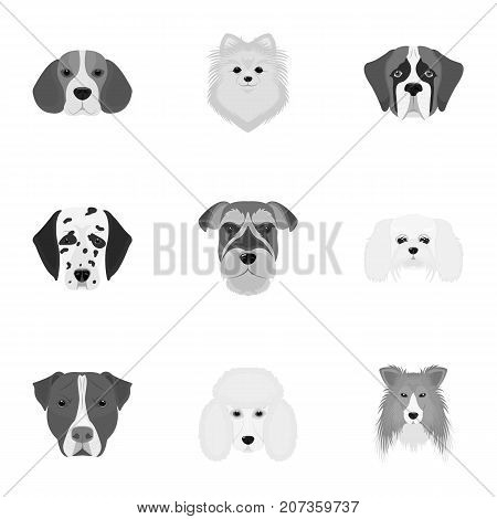 Doberman, Dalmatian, Dachshund, Spitz, Stafford and other breeds of dogs.Muzzle of the breed of dogs set collection icons in monochrome style vector symbol stock illustration .