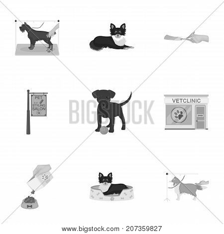 Walking with a dog, a vet clinic, a dog haircut, a puppy bathing, feeding a pet. Vet clinic and pet care set collection icons in monochrome style vector symbol stock illustration .