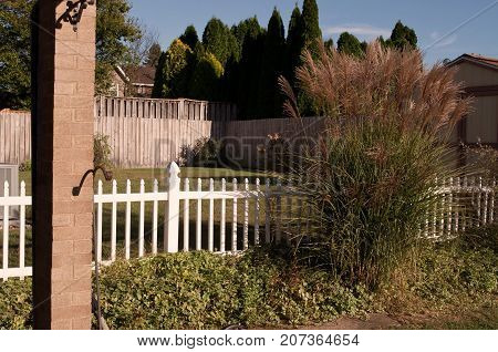 A backyard view with a white picket fence along with a wooden fence and maiden grass