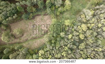 Aerial photo over green deciduous and conifer forest woodland clearing