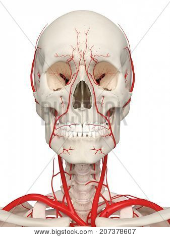 3d rendered medically accurate illustration of the head arteries