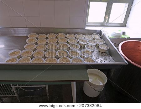 Forms Of Fresh Ricotta Cheese In The Dairy