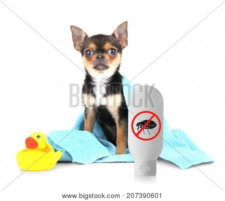 Puppy with towel and bottle of flea shampoo on white background