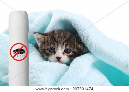 Kitten with towel and bottle of flea spray on white background