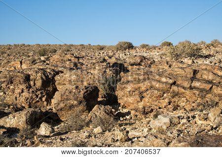 The stony landscape highlands of the Negev desert
