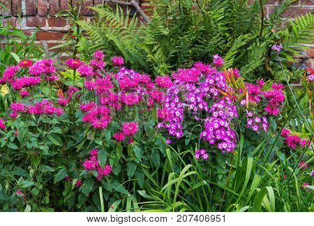 A Colorful Flowerbed.