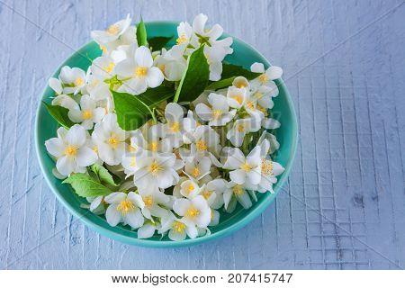 lots of jasmine flowers - flowers and plants
