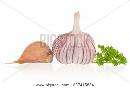 Garlic bulb with fresh parsley isolated over white background
