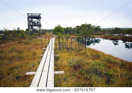 Big swamp wetlands Kemeri national park Latvia. Travel concept