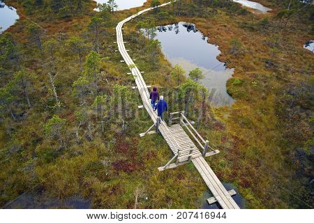 Big swamp wetlands Kemeri national park Latvia. Tourists walk on the swamp. Travel concept
