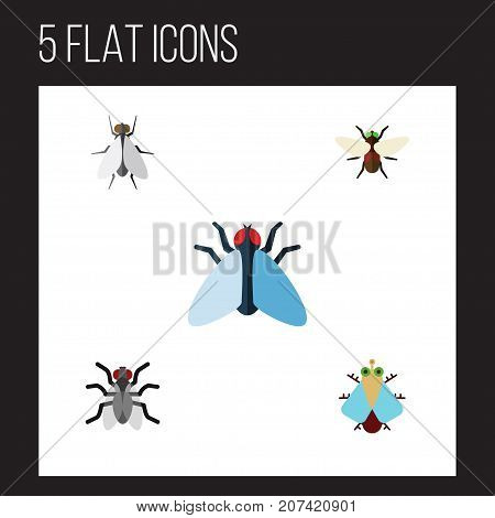Flat Icon Fly Set Of Gnat, Hum, Tiny And Other Vector Objects