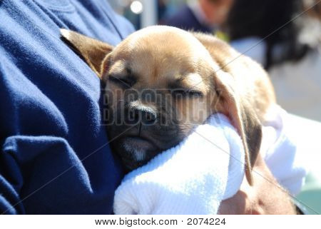 Sleeping Mutt