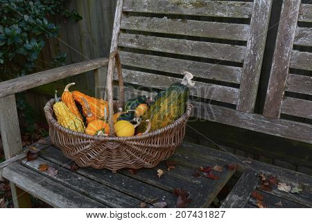 Woven Basket With Ornamental Gourds On A Wooden Bench