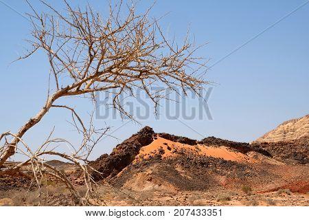Negev desert landscape in Crater Ramon National park Israel.