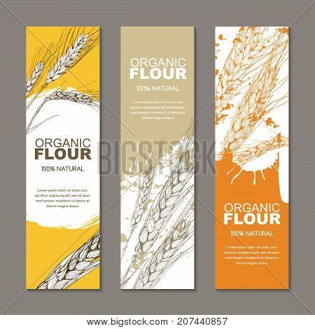 Set Of Vector Backgrounds For Label, Package. Sketch Hand Drawn Illustration Of Wheat Ears. Agricult