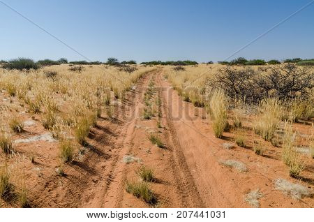 Sandy red dirt road with tire tracks leading through arid landscape with dry yellow grass and bushes, Damaraland, Namibia, Southern Africa.