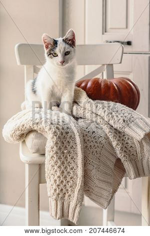 Cute kitten relaxing on warm sweater on a chair. Lazy cat resting on soft pullover. November weekend concept scene.