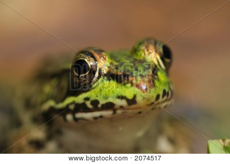 A very close-up picture of a green