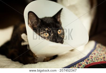 photo of a young tortoiseshell cat in a plastic Buster collar