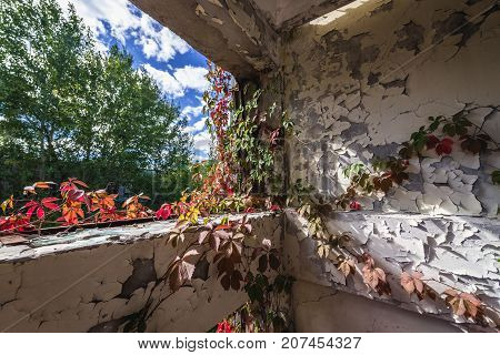 Ivy on factory building in abandoned Pripyat city in Chernobyl Exclusion Zone Ukraine