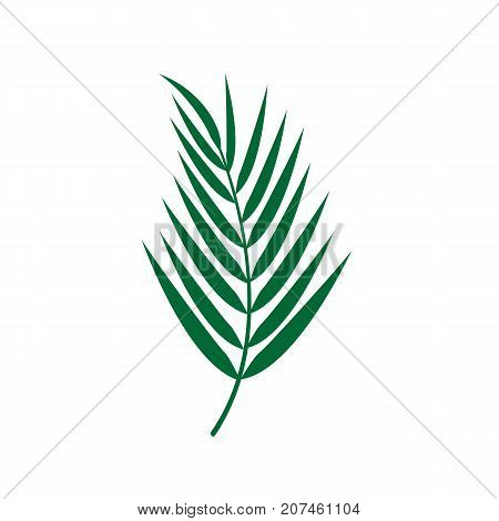 Palm leaves icon. Tropical leaves plant isolated on background. Vector stock.