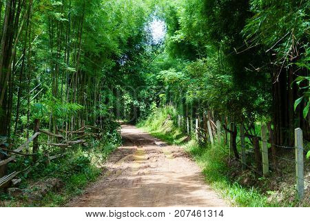Dirt And Muddy Rural Road During A Jungle Trip Through Bamboo Forest In Village At Countryside After