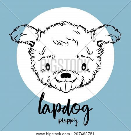 lapdog head isolated on white background. Vector illustration, element for design, cards, banners