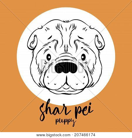 shar pei head isolated on white background. Vector illustration, element for design, cards, banners