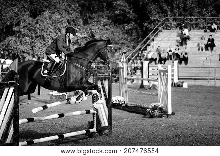 Young man jockey ride beautiful black horse and jump over the crotch in equestrian sport black and white with high contrast. October - 05. 2017. Novi Sad, Serbia. Editorial image.