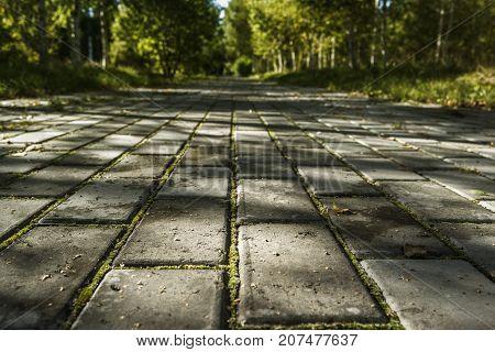 Park path. Park track. Park tiled track. Park landscape.