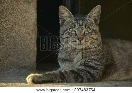 Half-cat Cat Lying On The Ground