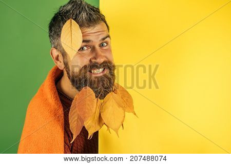 Hipster or bearded guy in autumn on green background. leaves beard at barber and hairdresser. cold and illness. Season and autumn. Man with natural yellow fall leaves beard in plaid.